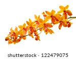 Orchid Isolated On White...