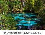 the hot blue and emerald... | Shutterstock . vector #1224832768