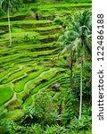 Tegallalang  Bali. The Most...