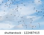 many birds flying in the sky ... | Shutterstock . vector #122487415