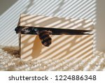 Stock photo siamese cat hides in a box cat games comfort zone new flat concept of loneliness 1224886348