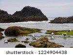 sea gulls bathing in fresh... | Shutterstock . vector #1224904438