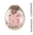 african pygmy hedgehog isolated ...   Shutterstock . vector #1224904495