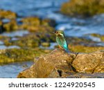 common kingfisher perched on... | Shutterstock . vector #1224920545