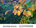 orange and golden foliage of...   Shutterstock . vector #1224958588