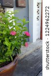 pink thai spike flower or ixora.... | Shutterstock . vector #1224962272