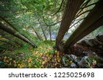 bottom view from the capilano...   Shutterstock . vector #1225025698
