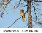 the bearded tawny length of the ... | Shutterstock . vector #1225102702