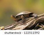Wester Pond Turtle On A Lof...