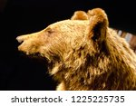 portrait of a stuffed bear | Shutterstock . vector #1225225735
