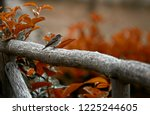 the solitary sparrow   Shutterstock . vector #1225244605