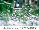 pre winter season. the first... | Shutterstock . vector #1225261315