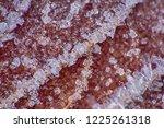 late autumn. frozen autumn... | Shutterstock . vector #1225261318