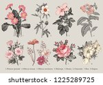 botany. set vintage medical... | Shutterstock .eps vector #1225289725