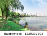 weeping willow on the shore   Shutterstock . vector #1225331308