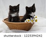 Stock photo two norwegian forest cat kittens in brown clay dish 1225394242
