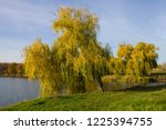 weeping willow tree over the...   Shutterstock . vector #1225394755