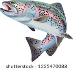 Trout Fish Illustration