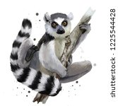 A Ring Tailed Lemur. Watercolo...