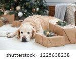 golden retriever puppy dog nap... | Shutterstock . vector #1225638238