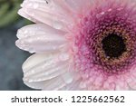 macro of the center of a... | Shutterstock . vector #1225662562