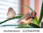 a pair of zebra finches sits on ... | Shutterstock . vector #1225664938