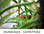 zebra finch hiding in the... | Shutterstock . vector #1225674262