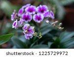 soft focus  close up beautiful... | Shutterstock . vector #1225729972