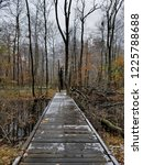 Icey Forest Bridge