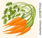 carrots in a bunch. vector... | Shutterstock .eps vector #1225879318
