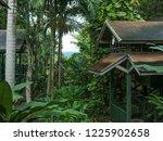 tropical park in jamaica   Shutterstock . vector #1225902658