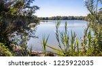 freshwater birds habitat at...   Shutterstock . vector #1225922035