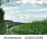 corn field for biogas | Shutterstock . vector #1226113285