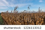 corn field for biogas | Shutterstock . vector #1226113312