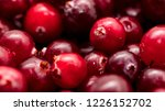 red cranberry berries as a... | Shutterstock . vector #1226152702
