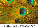 peacock feathers texture.... | Shutterstock . vector #1226165272