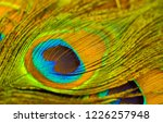 peacock feathers texture.... | Shutterstock . vector #1226257948