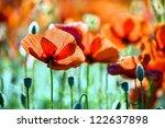 Poppy Flowers  Buds And Pods