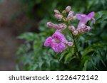 soft focus   closeup pink... | Shutterstock . vector #1226472142
