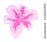 beautiful pink lily flower.... | Shutterstock .eps vector #1226543545