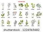 best medicinal expectorant... | Shutterstock .eps vector #1226565682