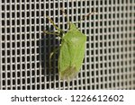green shield bug or stink bug... | Shutterstock . vector #1226612602