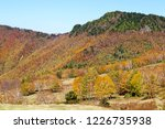 view of the autumn leaves of...   Shutterstock . vector #1226735938