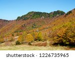 view of the autumn leaves of...   Shutterstock . vector #1226735965