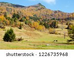 view of the autumn leaves of...   Shutterstock . vector #1226735968