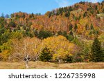 view of the autumn leaves of...   Shutterstock . vector #1226735998