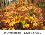 the colors of autumn. yellow... | Shutterstock . vector #1226757382