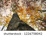 yellow leaves in a beech forest ... | Shutterstock . vector #1226758042