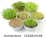 sprouts in white bowls. seven... | Shutterstock . vector #1226814148