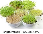 different sprouts in white...   Shutterstock . vector #1226814592
